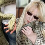 Pyton tygrysi grasuje nad Wisłą. Maryla Rodowicz boi się, że pyton zje jej koty