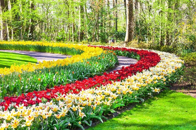 Rabaty będą wyglądać atrakcyjniej, jeśli umieści się na obrzeżach rośliny /123RF/PICSEL