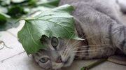 Radni walczą o piwnice dla kotów