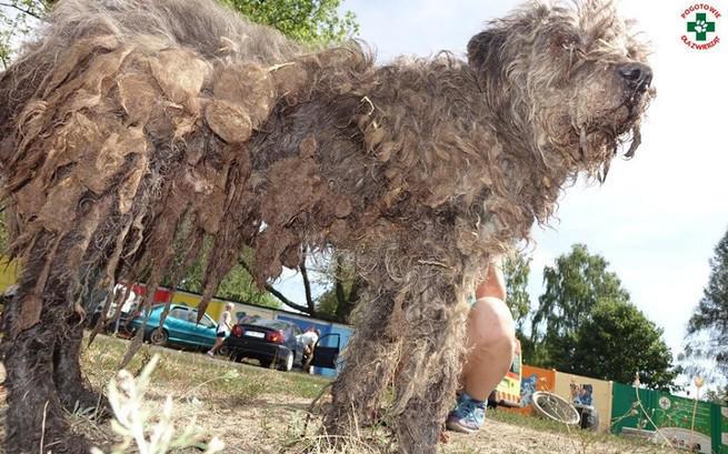 Radysy stały się symbolem cierpienia tysięcy psów /INTERIA.PL/materiały prasowe