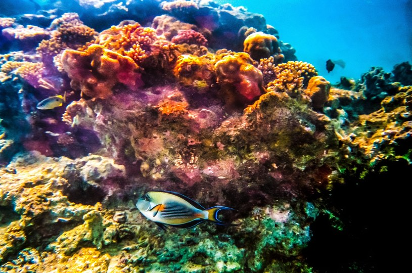 Rafa koralowa (zdj. ilustracyjne) /Woody Ochnio /East News