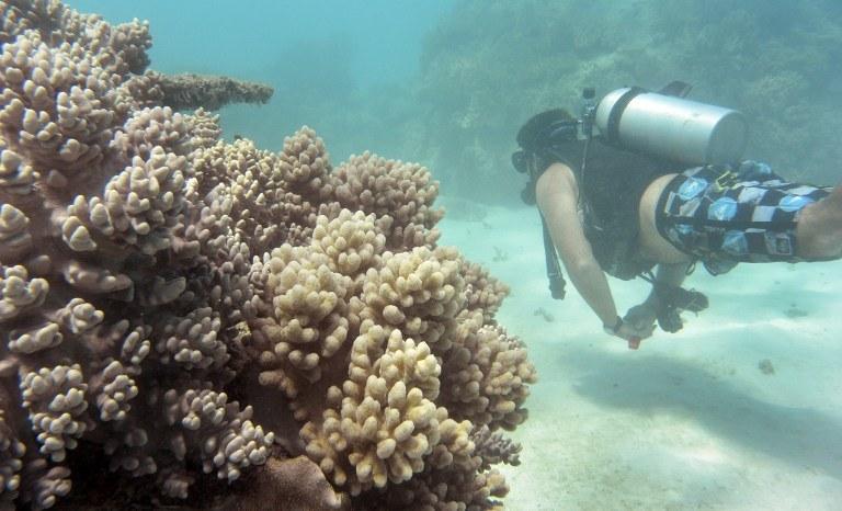 Rafa w Australii - NASA zbada raf koralowych w rejonie Florydy, Hawajów, Palau, Wysp Mariańskich oraz Australii /AFP
