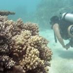 Rafy koralowe wkrótce pod obserwacją NASA