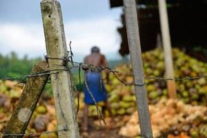 Raport MOP: Miliardowe zyski z pracy niewolniczej