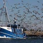 Raport: Nadal zbyt dużo ryb jest odławianych