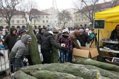 Razem z Margaret rozdawaliśmy choinki w Łodzi
