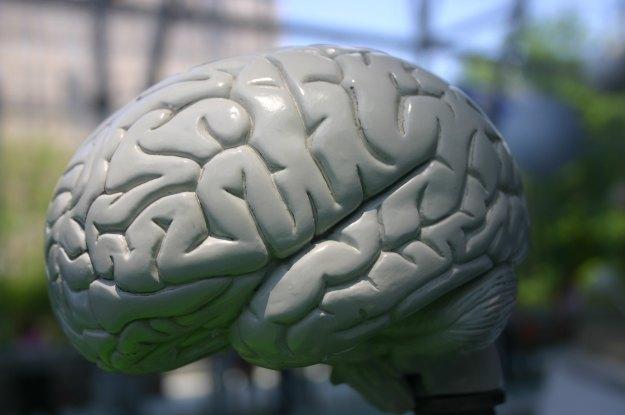 """""""Rdzenie synaptyczne"""" opracowane przez IBM zawierają 256 neuronów /stock.xchng"""