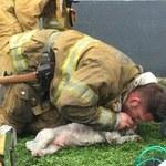 Reanimował psa przez 20 minut! Jego gest poruszył ludzi z całego świata!