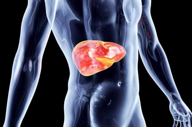 Regeneracja narządów to tylko kwestia czasu /123RF/PICSEL