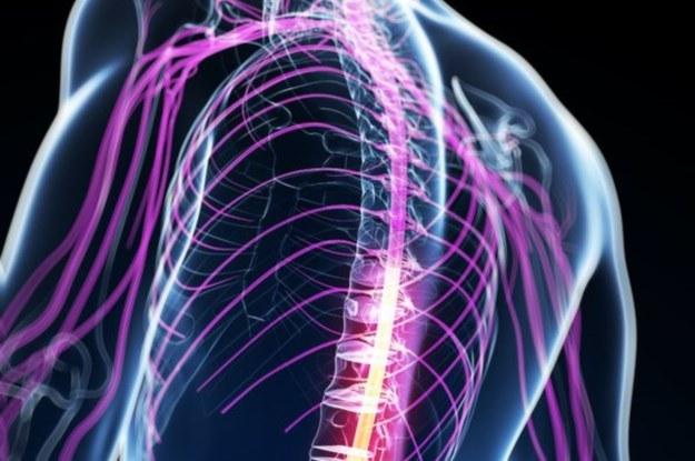 Regeneracja rdzenia kręgowego jest możliwa. Ale czy w pełni? /123RF/PICSEL