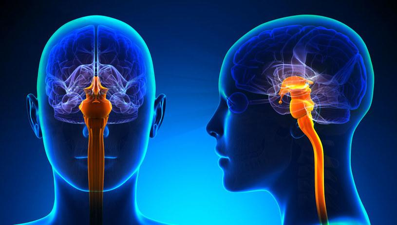 Regeneracja rdzenia kręgowego jest możliwa dzięki skutecznemu lekowi na raka /123RF/PICSEL