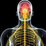 Regeneracja rdzenia kręgowego u ludzi jest tylko kwestią czasu?