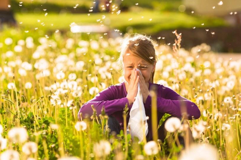 Regularnie sprawdzaj okresy pylenia roślin /123RF/PICSEL