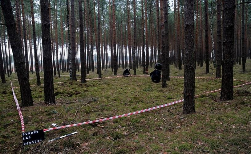 Rejon badań to las posadzony na początku lat 50. Jednak na przedwojennych mapach obszar ten jest również zalesiony /Odkrywca