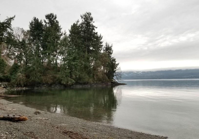 Rejon Fairy Creek to statni niechroniony obszar części Vancouver Island, gdzie rośnie starodrzew /AFP