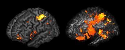 Rejony mózgu (po lewej) i ich połączenia (po prawej) ważne dla naszej inteligencji  /PNAS