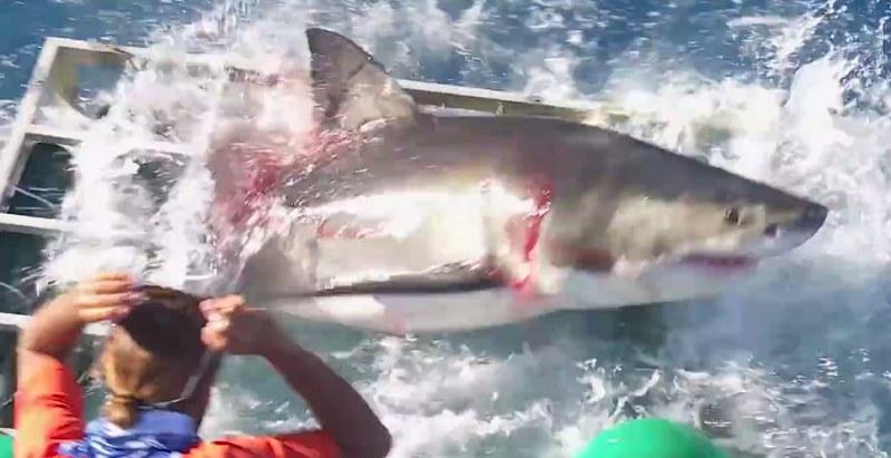 Rekin był naprawdę rozwścieczony /Gabe and Garrett  /YouTube