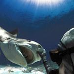 Rekin przeżył z kolcem jadowym w mózgu