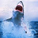 Rekiny: 10 mitów wokół oceanicznych zabójców