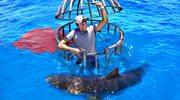 Rekiny szaleją na punkcie ludzkiej krwi? Wyjaśnił to raz na zawsze