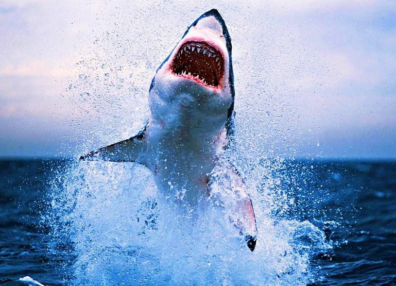Rekiny to groźne drapieżniki, wokół których krąży wiele mitów /AFP