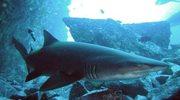 Rekiny w Weronie słuchają kolęd