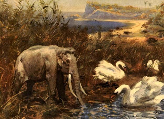 Rekonstrukcja środowiska naturalnego mamutów karłowatych na Wyspie Wrangla /MWMedia