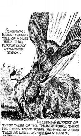 Rekonstrukcja wyglądu teratornów, wymarłych już wielkich drapieżnych ptaków /MWMedia