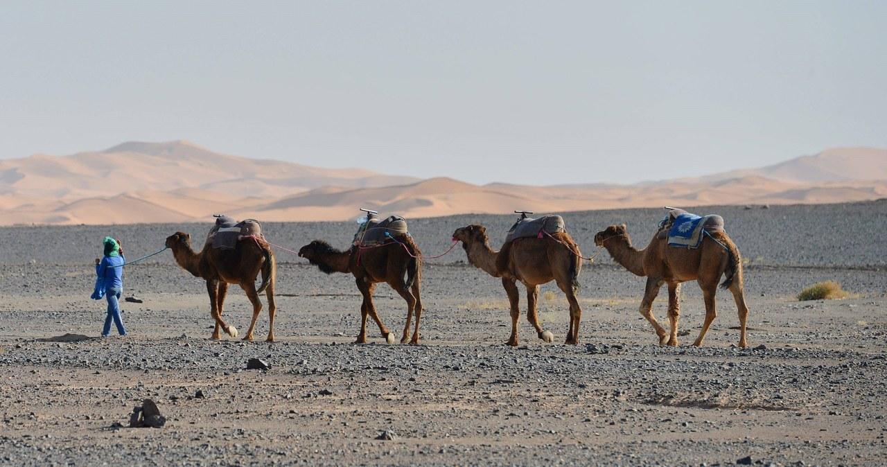 Rekordowe upały w Maroku. Termometry wskazały niemal 50 stopni