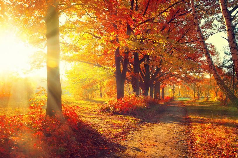 Rekordowo ciepła jesień może być zapowiedzią poważnych kłopotów z klimatem /123RF/PICSEL