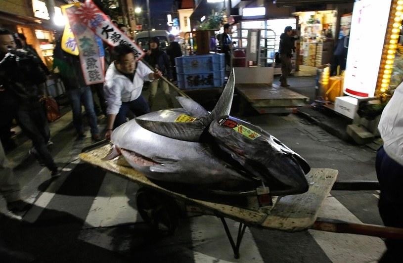 Rekordowy tuńczyk już trafił do restauracji /YouTube