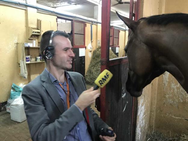 Reporter RMF FM Michał Dobrołowicz i Carla, klacz, która pochodzi z Irlandii i tydzień temu startowała w gonitwie. Zajęła drugie miejsce. Postawione uszy świadczą o tym, że koń jest zainteresowany i spokojny. /Michał Dobrołowicz /RMF FM
