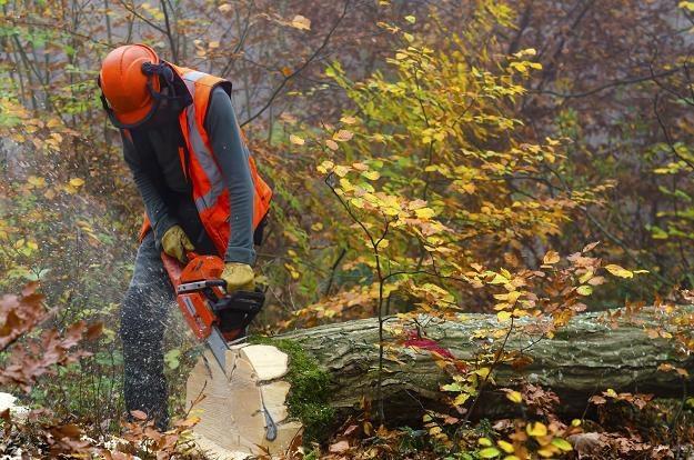Resort środowiska chce obniżyć kary za nielegalną wycinkę drzew /©123RF/PICSEL