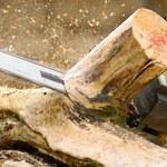 Rewolucja z drewnem energetycznym!