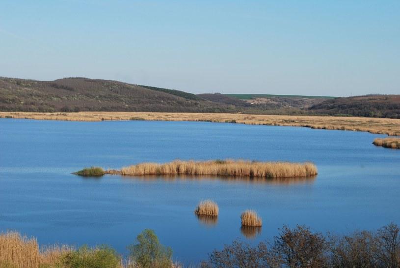 Rezerwat przyrody Srebyrna /123RF/PICSEL