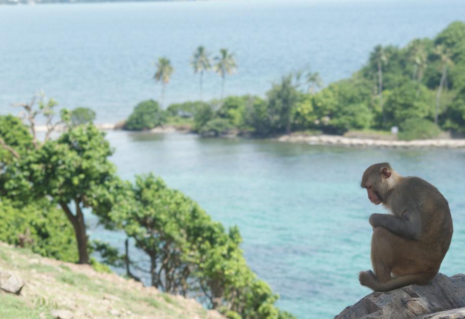 Rezus na wyspie Cayo Santiago w Puerto Rico. /Jamie Whitehouse /Materiały prasowe