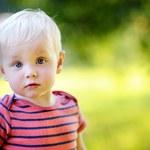 RMF24: Dwulatek nad ranem błąkał się po Świdnicy