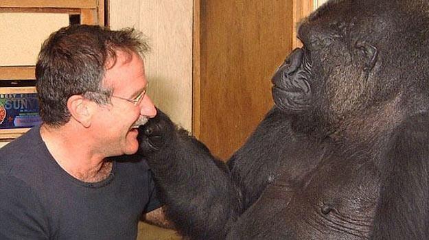 Robin Williams podczas zabawy z Koko w 2001 roku - for. koko.org /