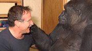 Robin Williams: Smutek gorylicy