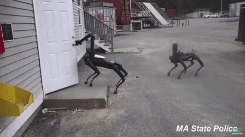 Robot Spot podczas akcji z saperami - zdjęcia operacyjne policji z Massachusetts /materiały prasowe