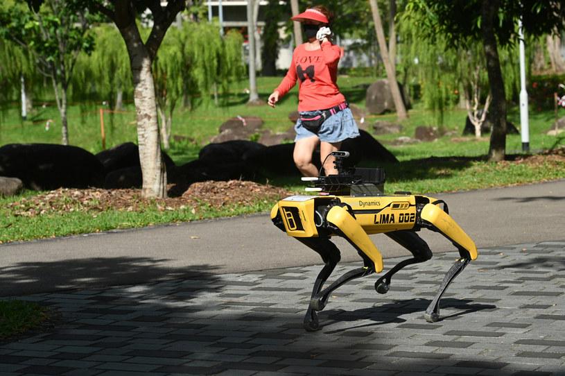 Robot Spot - rozwijany przez Boston Dynamics /AFP
