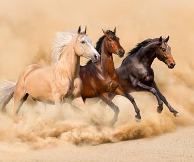 Rodzaje umaszczenia koni