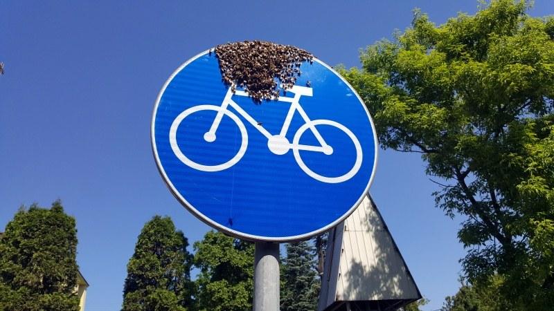 Rój pszczół na znaku drogowym przy ścieżce rowerowej /Straż miejska Warszawa /materiały prasowe