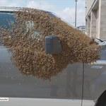 """Rój pszczół obsiadł auto. """"Poddani"""" ruszyli królowej na ratunek?"""
