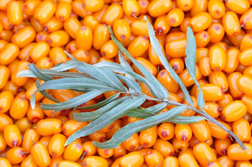 Rokitnik to roślina, która w stanie dzikim rośnie na terenach Europy i Azji /123RF/PICSEL