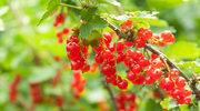 Rola warzyw i owoców w zwalczaniu skutków stresu oksydacyjnego