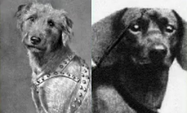 "Rolf (po lewej) i Kurnewal - dwa psy objęte programem ""Wooffan SS"" /YouTube"