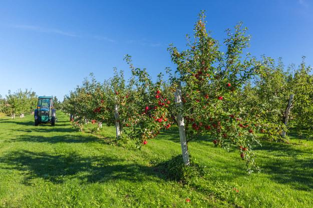 Rolnictwo potrzebuje coraz więcej pracowników sezonowych /123RF/PICSEL