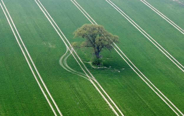 Rolnicy kupują ziemię za gotówkę. Ci, którzy jej nie mają mogą starać się o preferencyjny kredyt /AFP