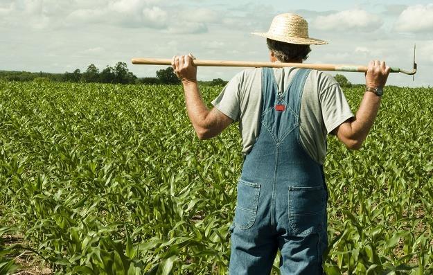 Rolnicy płacą tylko 35 proc składki za ubezpieczenie /©123RF/PICSEL